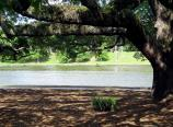 Cane RIver Bank Tree